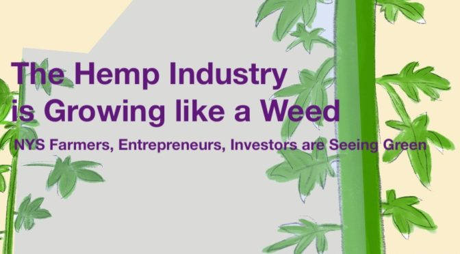 The New York State Hemp Industry is Growing like a Weed