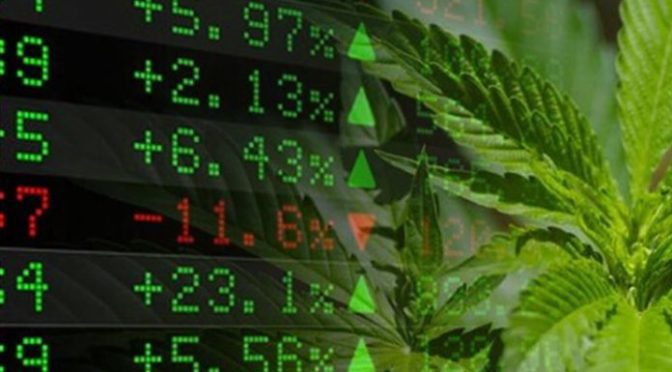 Is This Marijuana Stock the Next Big Opportunity?