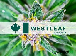 Westleaf to Combine with We Grow BC, Ultra Premium Cannabis Producer of Qwest Branded Products