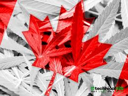 3 Canadian Cannabis Stocks With A Business Model Built To Weather The Storm