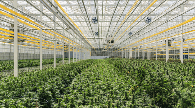 Is it All Coming Together for Cannabis Strategic Ventures (OTCMKTS:NUGS)?