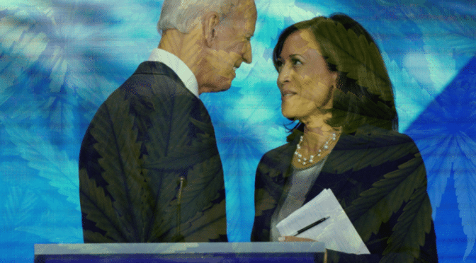 The Biden Presidency Looks To Be Installing Several Pro-Cannabis People Into Key Roles In Government