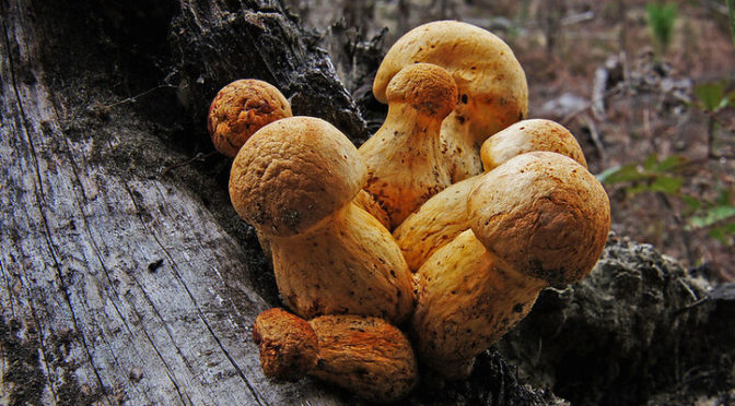 Will psychedelic mushroom vacations come to the U. S.?